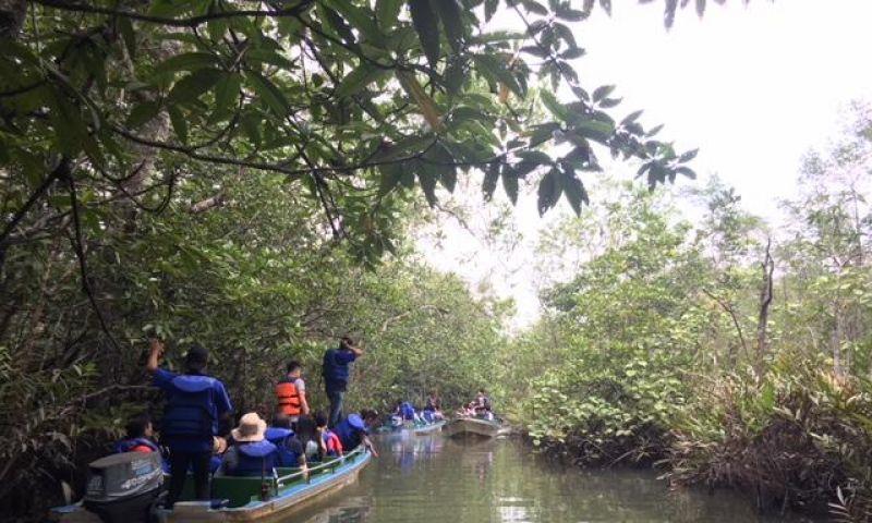 Yuk Susur Mangrove Di Bintan