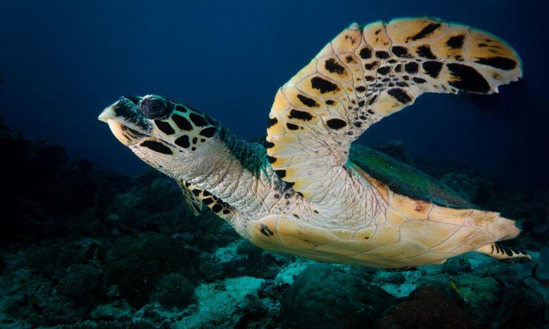 5 Tempat Menyelam Terbaik di Dunia