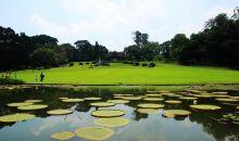 LIPI Tutup Kebun Raya Bogor dan 3 Kebun Raya Lainnya