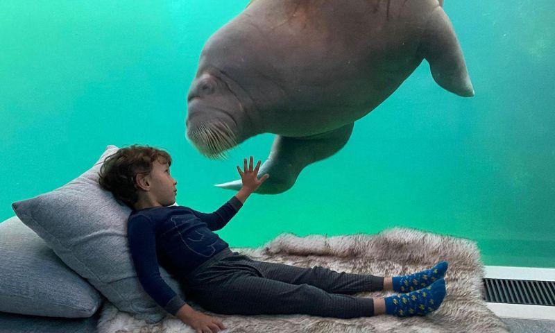 Menginap Bersama Walrus