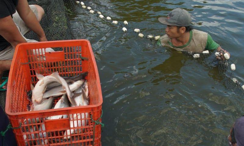 Tulungagung Diusulkan Jadi Kawasan Wisata Perikanan Patin